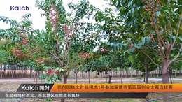 园林 凯创园林大叶丝棉木1号参加淄博市第四届创业大赛选拔赛