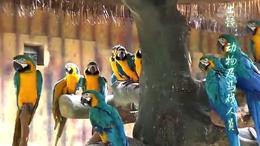 M013 南宁动物园   部分) 实拍 视频拍摄 摄像 跟拍...