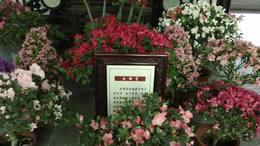 MAH00578杜鹃园 7花景展厅杜鹃园九段录像