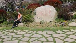 MAH00329•金匮公园樱花三.