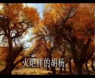 胡杨魂 作者:张海民 诵读:绿果果