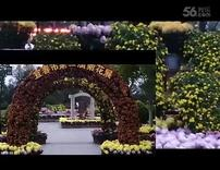 宜春市菊花展