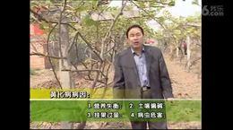 优质猕猴桃栽培技术(下)