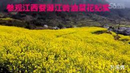 观赏江西婺源油菜花