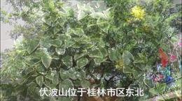 春游桂林:人在壶中 福在伏波