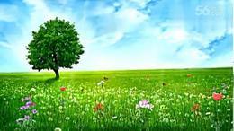 紫眸广场舞队天下最美的草原