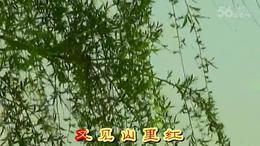 MV歌曲《又见山里红》演唱:祁  隆