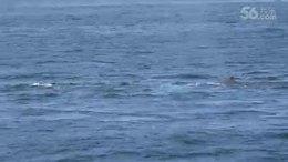 波士顿出海观赏鲸鱼2