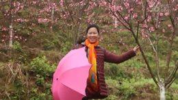 春游清水湾畔度假村     又是一年桃花开