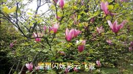新春的祝福 永远的赞歌