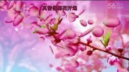 立华广场舞深圳专场