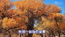 胡杨(闻梵男声独唱)—视频