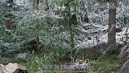 地球上最萌的动物——树懒