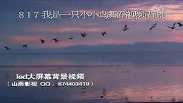 817 我是一只小小鸟 男生群舞 舞蹈背景 鸟儿飞翔素材...