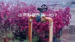 827  鲜花绽放 冬日南宁 花卉公园 南宁视频拍摄 摄像 外拍...