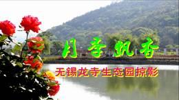 月季飘香——龙寺生态园掠影