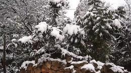 我的家乡下雪啦