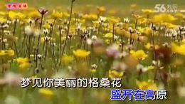 泽旺多吉-又见格桑花