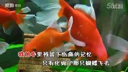 鱼水情歌   翻唱  风的季节