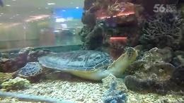 VID_20160808_134532海龟和小沙鱼
