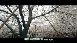 武汉东湖樱花节2019 3 29