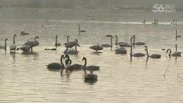 第36集:参观河南三门峡《天鹅湖湿地公园》