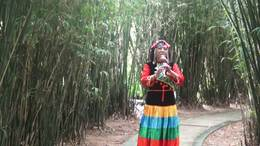露茜葫芦丝独奏 月光下的 凤尾竹
