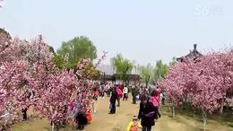 莫愁湖海棠花