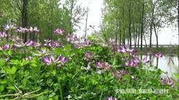 安徽阜南王家坝《我们的田野》 寻找老家那些记忆中的影像
