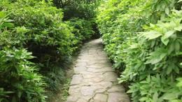 MAH00576杜鹃园 5绿色道路杜鹃园九段录像