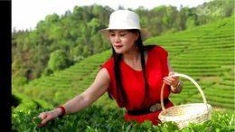 益阳摄友大本营组织拍采茶活动