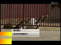 直播肉驴养殖技术视频 新疆驴养殖场改良肉驴苗