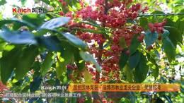 """凯创园林荣获""""淄博市林业龙头企业""""荣誉称号 丝棉木种植基地"""