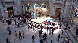 (340)第40集:盛顿自然博物馆《下集》2016北美之行纪实片(14)