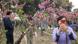 MAH00552阳山桃花节一实地录八段 4