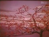 电影《江姐》插曲33  红梅赞