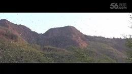 贵州盘县竹海镇 百万燕雀飞舞如潮 在非洲才能看到震撼景观