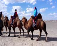 第五集:额济纳旗天边骆驼