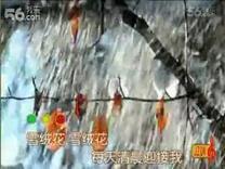 雪绒花【伴】