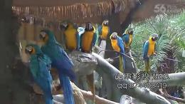 南宁动物园 摄像 视频拍摄 影视制作 mv 跟拍 鳄鱼 鸳鸯 海豚...