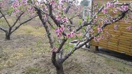 MAH00549阳山桃花节一实地录八段 1