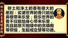 《佛说无量寿经广释》11