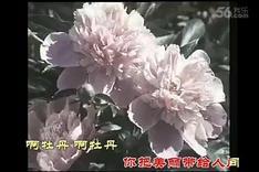 电影《红牡丹》插曲  牡丹之歌