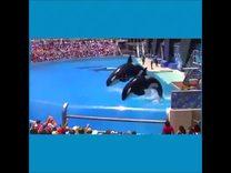 海豚表演欣赏