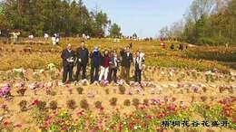 中国梧铜花谷