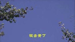 2019北京【银杏黃了】