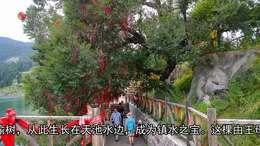 金秋遛弯去北疆(七)天池——西王母的瑶池