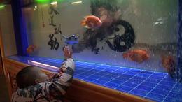 金鱼与奇特海洋生物视频直播回放