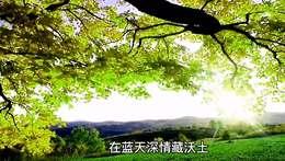 《好大一颗树 》MV视频制作.舞者清心【我的翻唱】