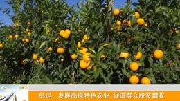 牟定:发展高原特色农业 促进群众脱贫增收_云南楚雄网